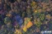 入冬后的杭州仍绿意盎然 西湖色彩斑斓