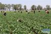 德州新增3家供港蔬菜基地 预计年产量3500吨
