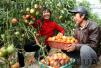 西红柿、苹果有助戒烟者肺部功能修复