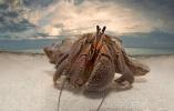高清图:一组有趣的野生动物特写照片!
