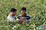 衡水市积极调整农业产业结构取得良好经济效益