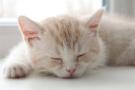 疲劳放任不管当心变成慢性病 如何消除疲劳