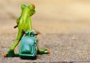 辟谣:拉面蓬灰致癌?青蛙旅行是生育测试?