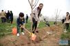 驻马店市西平县一天义务植树十万余株