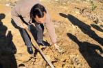 """浙江景宁这个悬崖村只有16人 他们要在峭壁上种出""""发财树"""""""