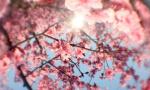 微观春色柳绿花红
