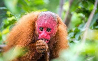 15种最稀奇古怪的动物-中国搜索国际
