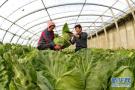 山东将示范集成推广新技术 助力蔬菜产业绿色发展