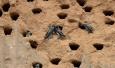 河南一工地停工 护数千只崖沙燕筑巢
