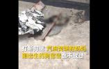 徐州十三中回应学生虐狗:涉事学生积极认错