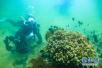 青岛:3.1万个海洋天然产物三维结构向全球开放