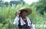 """志愿者探访""""新庄中国兵墓"""",拟为牺牲老兵重新修墓立碑"""