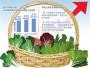 山东寿光洪灾对北京蔬菜短期供应影响有限