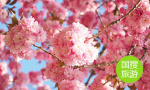 在枫叶飘零的晚秋 来济南这些地方赏菊花看落叶吧