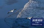 中国渔船在海上沉没致5人失联 日本派飞机搜救