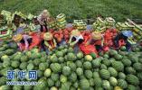 设施西瓜带动阜城农业走上转型发展之路