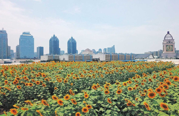 """郑州市中心现""""屋顶太阳林""""!约7个篮球场那么大"""