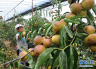 河北从八方面培强特色农业扶贫主导产业