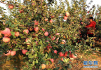 到2020年河北农作物耕种收综合机械化水平将超83%
