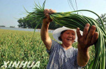 第二十三届中国(廊坊)农交会将于11月举办