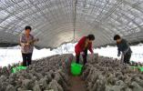 河南葉縣:發展村集體經濟 助推鄉村振興