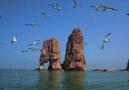 投资9780万 獐子岛马坨子国家级海岛生态修复项目开工