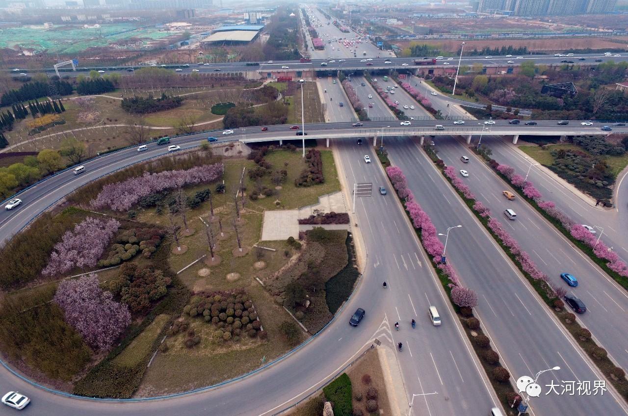 中州大道北段的春色。