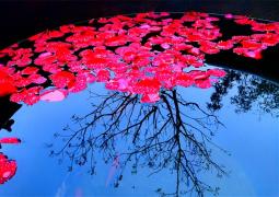 【徐州美文】诗在水中央,暗香浮动