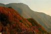 洋盘了我的大重庆 重庆诗人笔下的山城太美