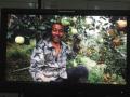 《苹果树下》 明日登陆央视 讲述辽南果农四季人生
