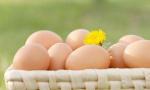 蛋壳颜色浅多由老母鸡所产 跟营养程度无关