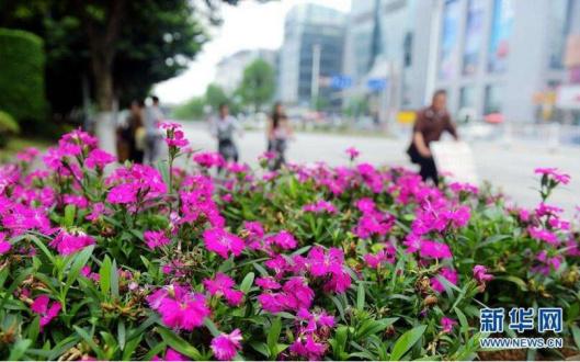 北京市属公园将迎游园高峰