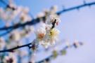 阳光正好,来玄武湖赏花赏水赏春光!