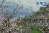 重庆推出30余条旅游精品线路 邀国内外游客踏青赏花