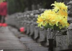 沈阳市殡仪馆将关闭焚烧场 祭祀不要带烧纸了