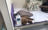 南京惊现顶级宠物医院:狗狗可做核磁还能血透