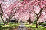 二十四节气:古诗文中的春分节气