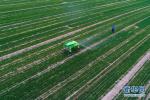定州:农业生产废弃物循环利用大力推进