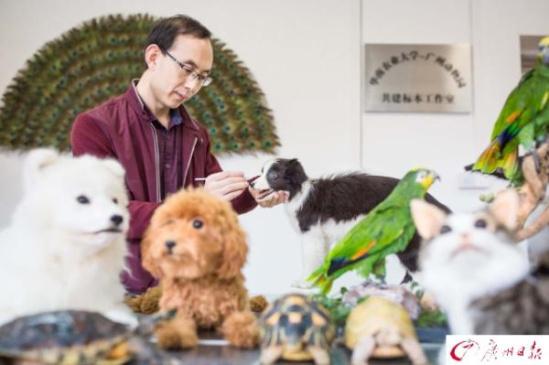 广州 宠物/核心提示:宠物离世后,超过8成的主人愿意将宠物送往卫生处理...