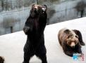 奇事!饲养员带熊外出吃冰激凌,这家动物园吃官司