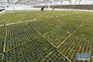 济南将振兴十大农业产业