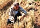 麦收下的中华大地