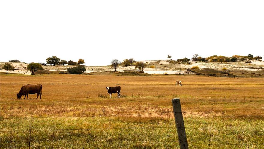 内蒙古赤峰 30多万平方公里发生干旱