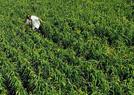 循环农业 绿色发展