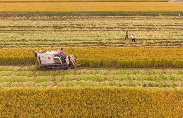 河南孟津:黄河岸边的丰收画卷