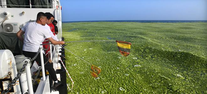 黄海海域浒苔分布面积超过5万平方公里