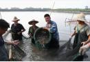 浙江湖州:围网捕虾丰收季