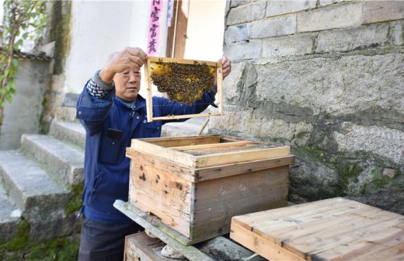 河南新县:绿水青山蕴福祉 兄弟齐心奔小康
