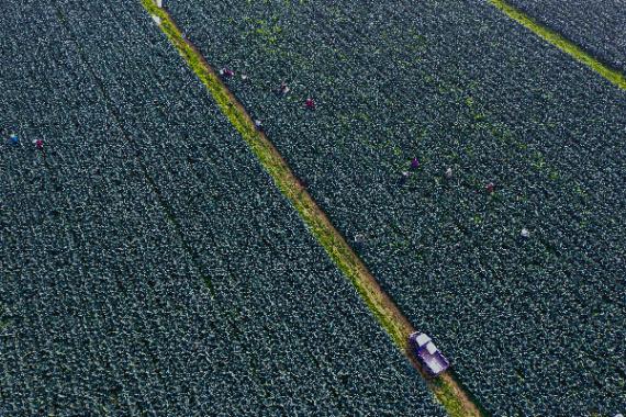 信阳光山县:特色蔬菜种植富乡亲