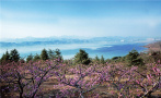 河南嵩县:春季赏花正当时